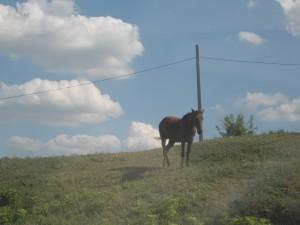 Cal pe marginea drumului
